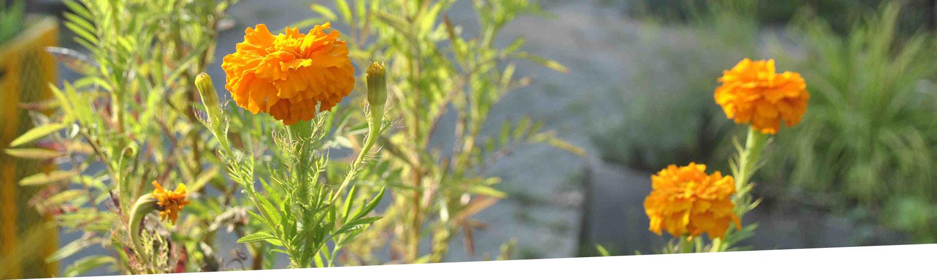 Blüten auf dem Lucie Flechtmann Platz